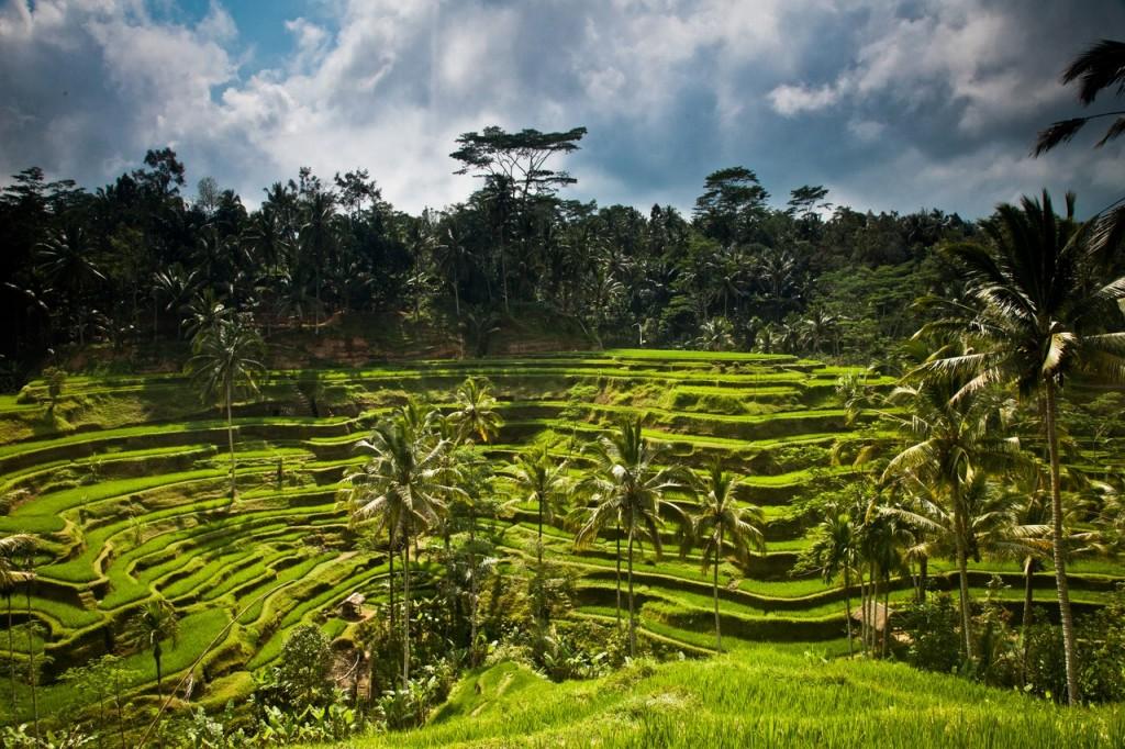 Rizières Ubud - Top 10 activités à Ubud - Ubud