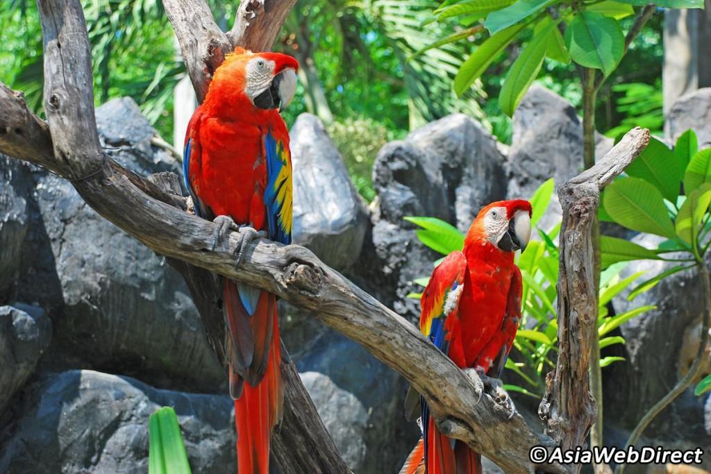 Bird Park - Activités Gili
