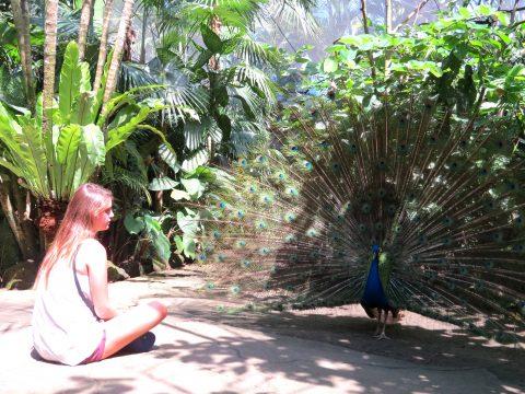 Shanti Travel - voyage à Bali - Bali Reptile Bird Parc