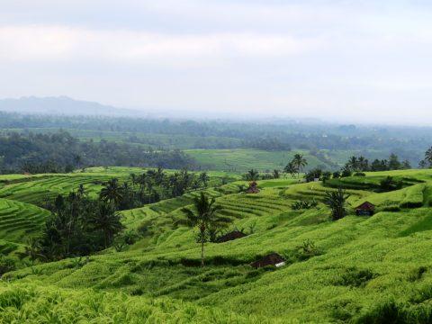 Shanti Travel - voyage à Bali - rizieres de Jatiluwih