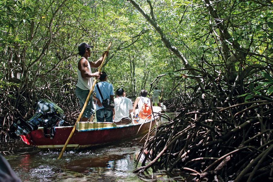 Verdoyante, la mangrove de Nusa Lembongan est encore sauvage. (Crédit photo : nowbali.co.id)