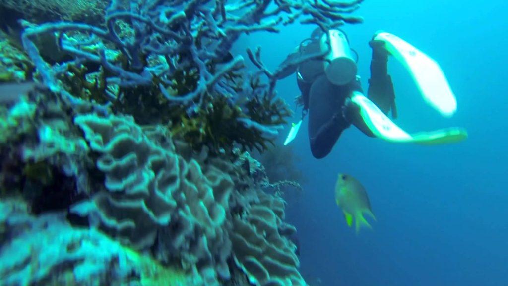 Plonger à Pemuteran promet une expérience extraordinaire, pour confirmés ou débutants. (Crédit photo : youtube.com)