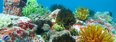 Dans la baie de Candidasa, les fonds sous-marins offrent encore une profusion de coraux et une flore extraordinaires.