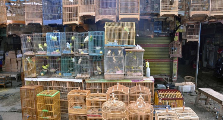 Le marché aux oiseaux est particulièrement intriguant pour les visiteurs. (Crédit photo : sebandung.com)