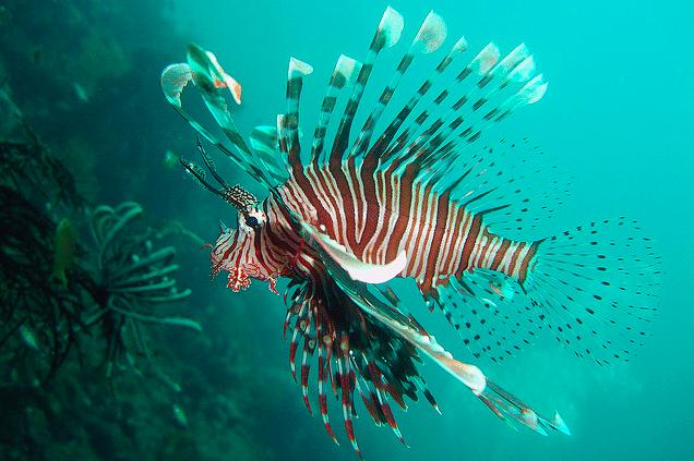 Plongée - Iles Gili
