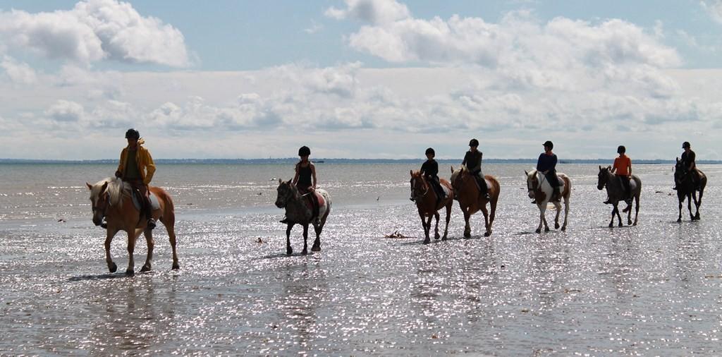 Promenade à cheval - activités Gili