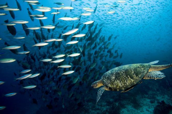 Snorkeling - Gili