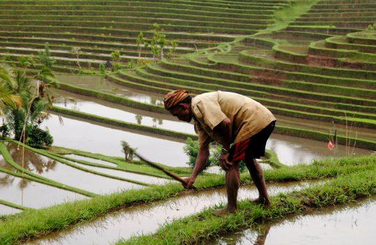 Shanti Travel - voyage à Bali - Sidemen rizieres