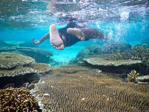 Shanti Travel - voyage à Bali et Komodo - plongée