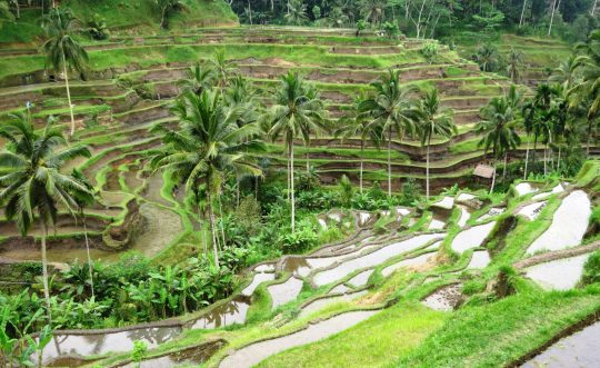 Shanti Travel - voyage à Bali - rizieres Ubud Tegalalang