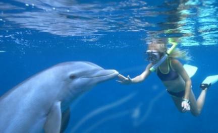 Il est possible de nager avec des dauphins sur l'île de Bali : un véritable rêve devenu réalité ! (Crédit photo : secretglobe.com)