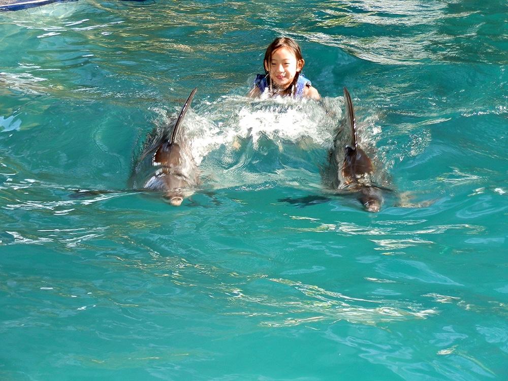 Nager avec les dauphins est une expérience hors du commun ! (Crédit photo : www.melkahotel.com)