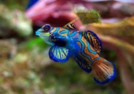 La faune subaquatique offre des images hors du commun. ( Crédit photo : explorama.org)