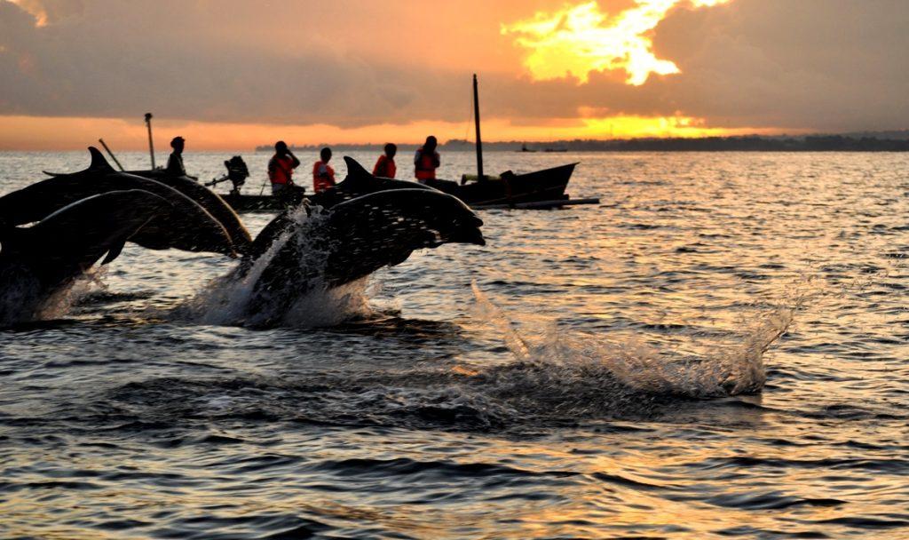 A Lovina, les dauphins nagent en toute liberté autour des bateaux. (Crédit photo : govoyagin.com)